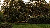 Parcul botanic, Timişoara