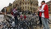 Pigeons in Victory Square, Timişoara